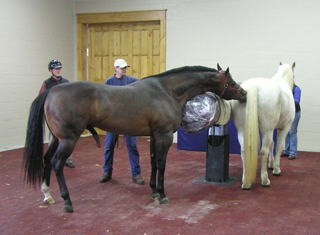 Select Breeders Services Collecting Semen From The Young