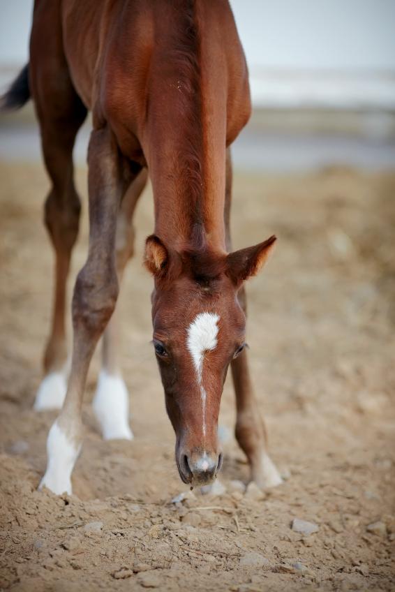 Foal_inhaling