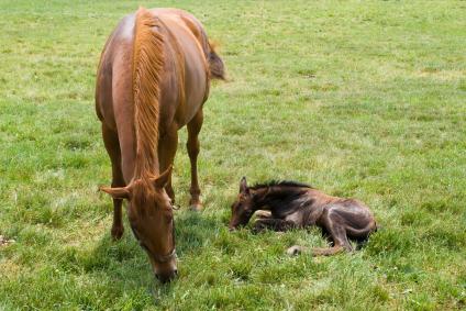 Foal_newborn