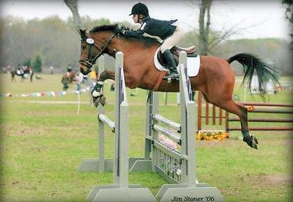 Mandolynn_Hill_Jumping Horse