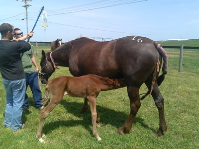 Retained_Mare and Foal