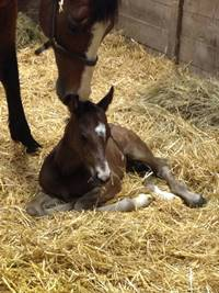 Foal_2014_Benediction_Bugatti