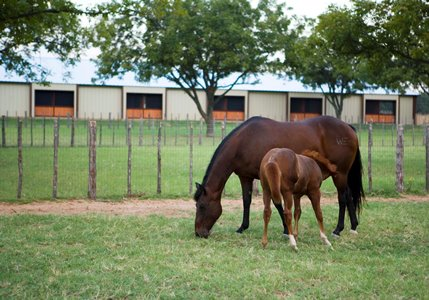 Weatherford Equine_Mare and Foal