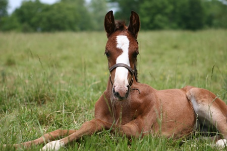 Rachel_Popeye K Cyril Foal Laying