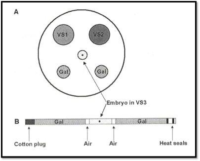 Embryo Vitrification_VIT Procedure