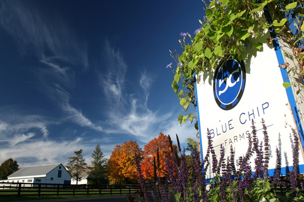 Blue Chip Farms_Entrance