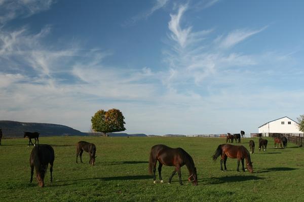 Blue Chip Farms_Pasture