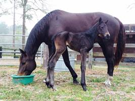Foal_2015_Kindred P_Everdale 200x