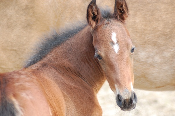 Cooper_Smart Spook Foal