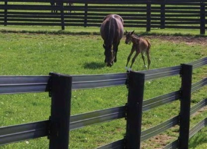Select Breeders Services Safe Fencing Options For Horses