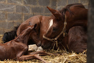 Why Colostrum_Mare and Foal Photo
