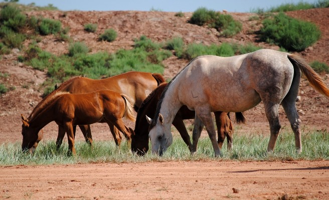 AQHA Rule Change - Mare Photo