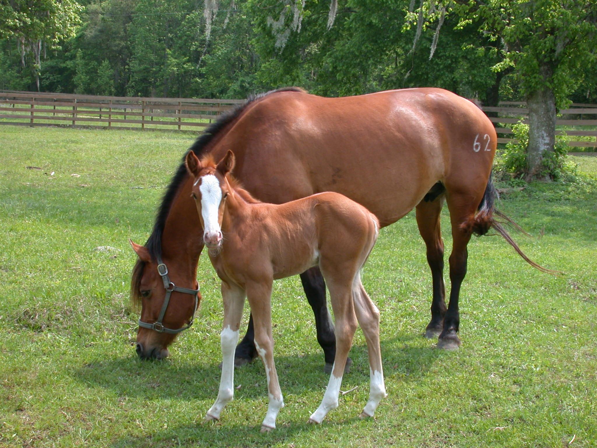 Similiar Stallion Reproductive Keywords