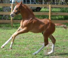 Foal_2015_Decked Out_Uno Don Diego x Roma 200x