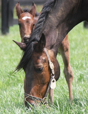 Riding Pregnant Mares_Foal Nibbling on Mare Ear