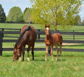 How to Prepare Your Older Mare - Mare and Foal