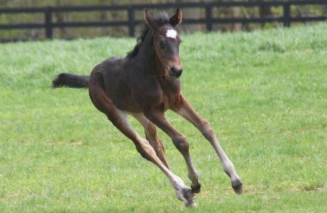 Managing and Feeding the Orphaned Foal - Phoebe Running
