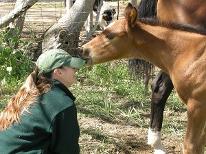 Nicole Website_with foal