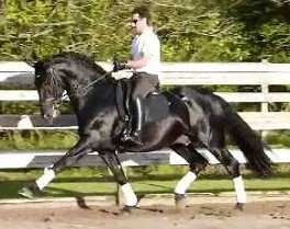 Maria mandina   stallion photo