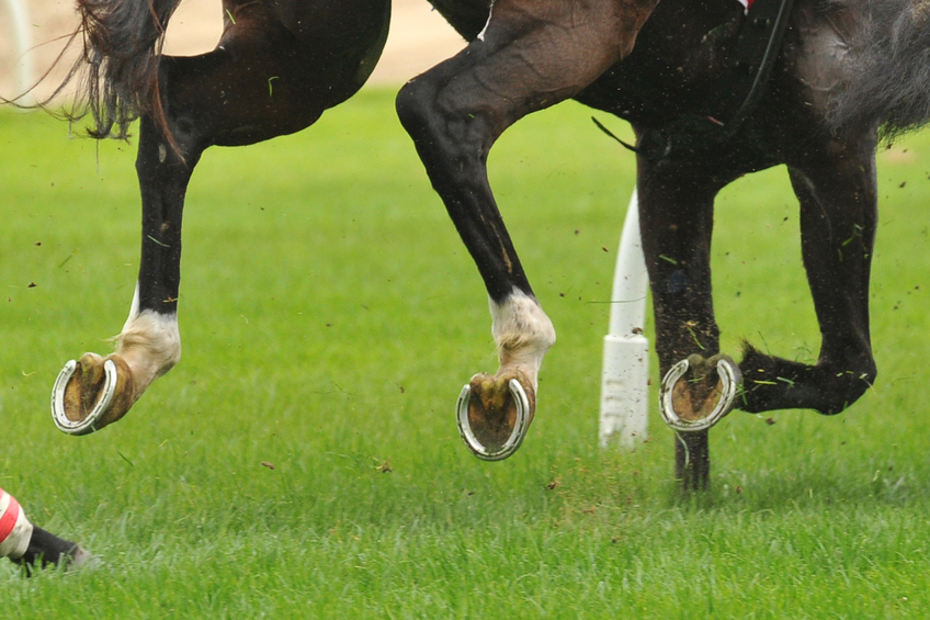 Nutrition for Hoof Health - Racing Hooves