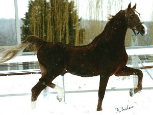 Stallion_Attaches Liquid Asset in the Snow
