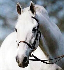 Stallion_Abdullah Headshot 2