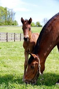 Foal_2017_Filly_Wicked Courtjester x Hopenhof's Silvia 200x