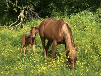 FOal_2017_Chigger_Kit Dual x I'll Play Smart 200x