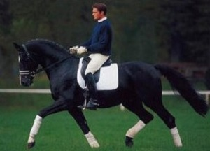 Stallion_Dressage Royal