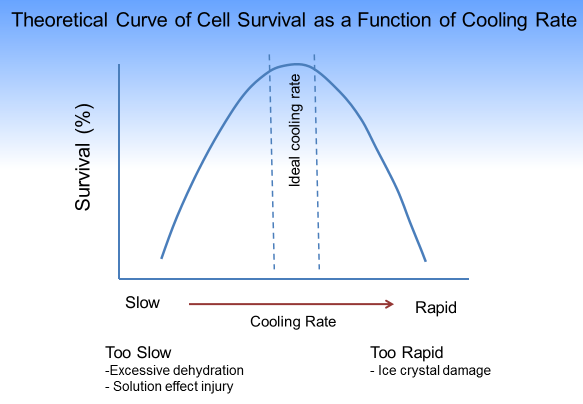 The Major Causes of Damage to Sperm During Freezing_Curve of Cell Survival as a Function of Cooling Rate