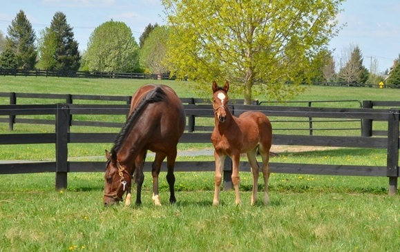Mare and Foal at SBSVS
