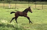 ^2019 Foal_Colt_Don Principe x Pebbles 200x