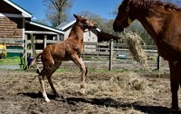 ^2019 Foal_Pursuit of Happiness_Parabol x Rose Campbell 200x