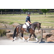 Fontaine blue vdl trotting